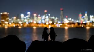 Wildlife photojournalists share their best photos